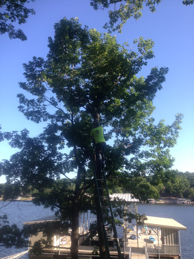 Osage Beach Tree Trimming