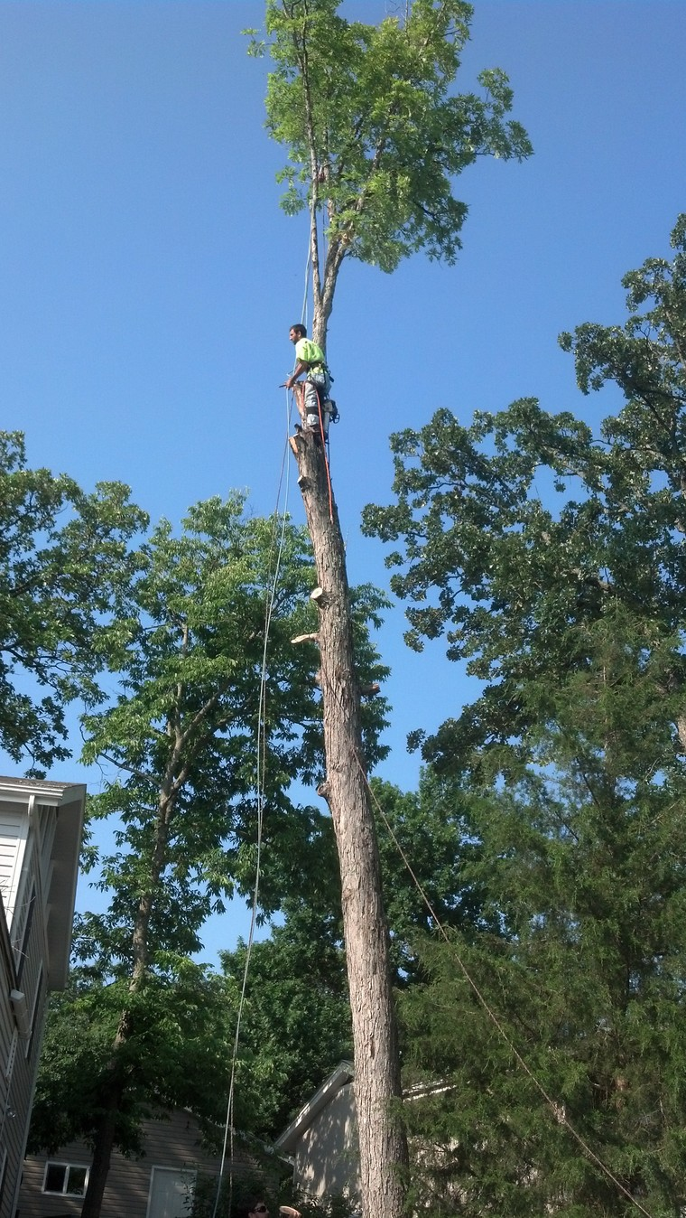 Camdenton MO Tree Removal